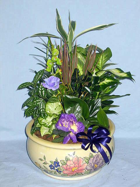 Ashleys Florist and Antiques Dish Gardens